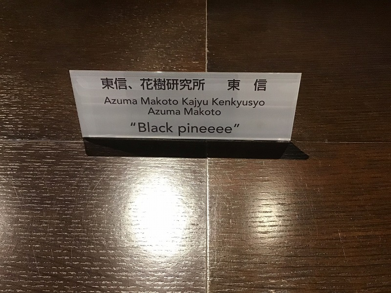 東信、花樹研究所 東 信氏作 Black pineeee